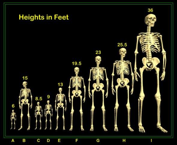 Comparativo humano y gigantes