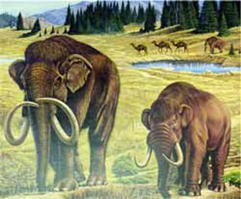 Dibujo Escena del Pleistoceno Mamut, Mastodonte con Camellos en el fondo