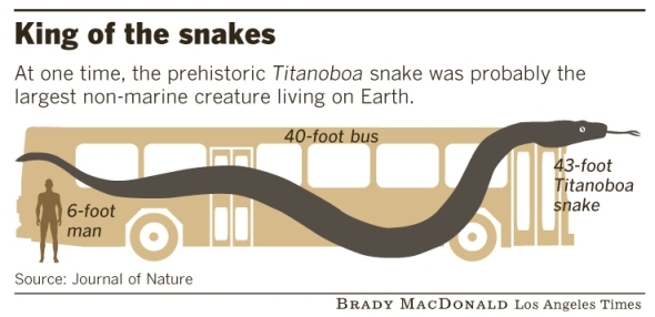Tamaño comparativo Titanoboa