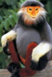 monkey-cambodia