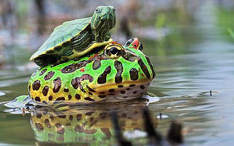 potd-lead-turtle_f_3184300c